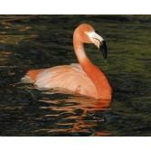 Lundi Flamingo Regular
