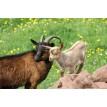 Automatenfutter für Schaf Ziege Rehe - Lundi Onlineshop